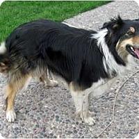 Adopt A Pet :: Sis - Glenrock, WY