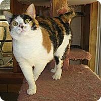 Adopt A Pet :: Flower Girl - Poway, CA
