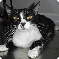 Adopt A Pet :: Candace -Special Adoption Rate - St. Louis, MO