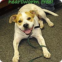 Adopt A Pet :: Dewey - Waycross, GA