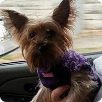 Adopt A Pet :: Jazzie - Russellville, KY