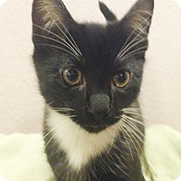 Adopt A Pet :: Winston - North Highlands, CA