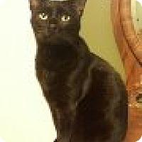 Adopt A Pet :: zz 'North' courtesy listing - Cincinnati, OH