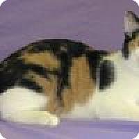Adopt A Pet :: Callie - Powell, OH