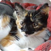 Adopt A Pet :: Susie - Colmar, PA