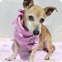 Adopt A Pet :: Kiki - Aurora, CO