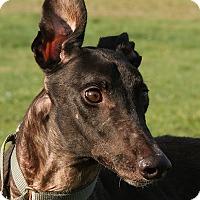 Adopt A Pet :: Bach - Portland, OR