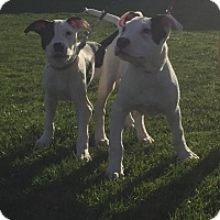 Adopt A Pet :: Bentley and Cooper, sweeties - Sacramento, CA