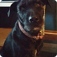 Adopt A Pet :: Minnie - Richmond, VA