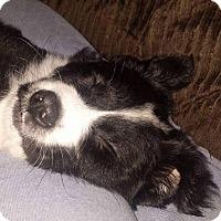 Adopt A Pet :: Jim~ meet me! - Glastonbury, CT