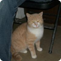 Adopt A Pet :: Oliver - Portland, IN