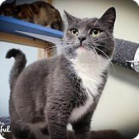 Adopt A Pet :: Storm 2 - Leonardtown, MD