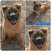 Adopt A Pet :: Wilson - Clear Lake, IA