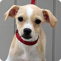 Adopt A Pet :: Eddie Frazier - Yardley, PA