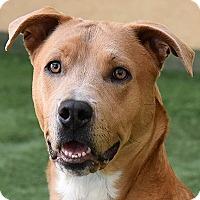 Adopt A Pet :: Tobi - Burlingame, CA