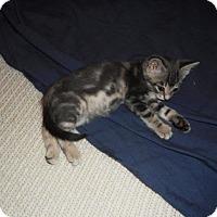 Adopt A Pet :: Julia R - Richmond Hill, ON