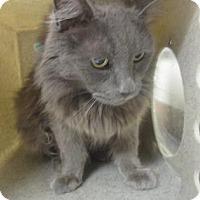 Adopt A Pet :: LACY - Reno, NV