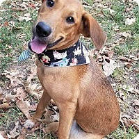 Adopt A Pet :: Izzee ~ ADOPTED! - Allentown, PA