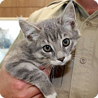 Adopt A Pet :: Chewie - Edgewood, NM