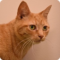 Adopt A Pet :: Pumpkin - Flushing, MI