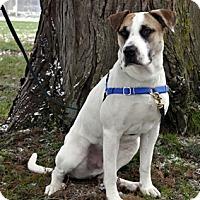 Adopt A Pet :: Chaplin - Woodburn, OR