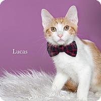 Adopt A Pet :: Lucas - Houston, TX