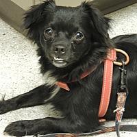 Adopt A Pet :: Missy - Pomerene, AZ
