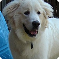 Adopt A Pet :: Archie  *Adopted - Oklahoma City, OK