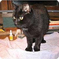 Adopt A Pet :: Elka - Portland, ME