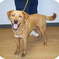 Adopt A Pet :: Gunner - Lewisville, IN