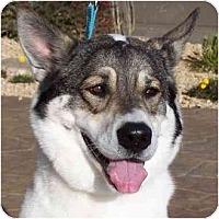Adopt A Pet :: Riley - Las Vegas, NV