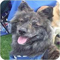 Adopt A Pet :: Sammy - Phoenix, AZ