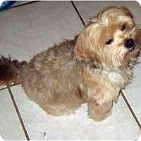 Adopt A Pet :: Rory - Conroe, TX