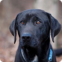 Adopt A Pet :: Fred - Lewisville, IN