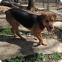 Adopt A Pet :: Rosa - House Springs, MO