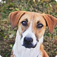 Boxer Mix Dog for adoption in Fayetteville, Georgia - Magpie