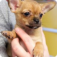 Adopt A Pet :: Ben - Homewood, AL