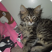 Adopt A Pet :: Toby - Medina, OH