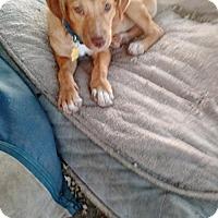Adopt A Pet :: Mandy Moore (Owner Surrender) - Philadelphia, PA