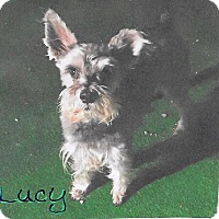 Adopt A Pet :: Lucy (ADOPTION PENDING) - Sharonville, OH