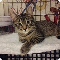 Adopt A Pet :: Grapenut - East Brunswick, NJ