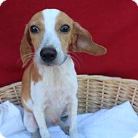 Adopt A Pet :: Surrat - Waldorf, MD
