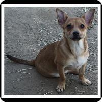 Adopt A Pet :: LOGAN - Winchester, CA
