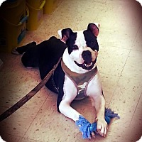 Adopt A Pet :: Lil MT - Seaford, DE