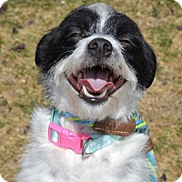 Adopt A Pet :: Kiki - Meridian, ID