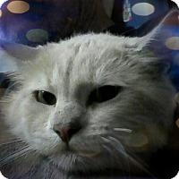 Adopt A Pet :: Radio - Trevose, PA
