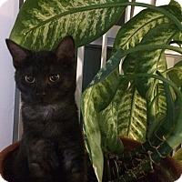Adopt A Pet :: Gideon - Toronto, ON