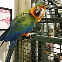 Adopt A Pet :: Tatiana - Hightstown, NJ