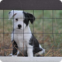 Adopt A Pet :: Jane - Tomball, TX