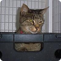 Adopt A Pet :: Phoebe - Gunnison, CO